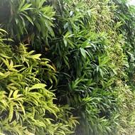 gardeningtaman
